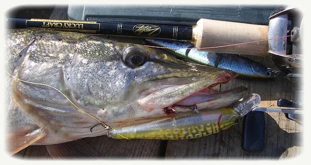 запрещенные приманки для ловли рыбы