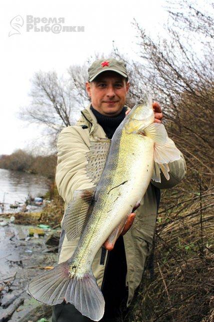 Интернет-журнал о рыбалке и что ловить судака?