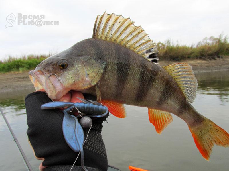 кракозябра в рыбалке